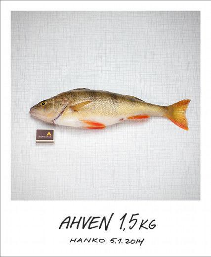 Kaikkien aikojen kalavale
